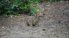 Two Little Grey Rabbits Stock Footage
