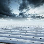 Field agriculture mulching film protect and rainclouds - stock photo