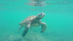 Green Sea Turtle Coming Up For Air Underwater Stock Footage