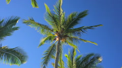 Palm Trees On a Beautiful Sunny Background in Paradise. - stock footage