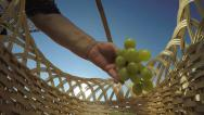 Stock Video Footage of Hand of senior woman putting bunches of white grapes in basket