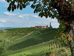 Vineyard, Farm house - stock photo
