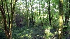 Walking Through Woodland Stock Footage