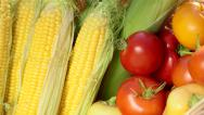 Stock Video Footage of Fresh vegetables in wicker basket at the garden closeup