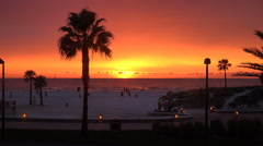 Palm Tree At Sunset Clearwater Beach Florida Stock Footage