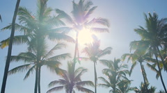 Palm Trees On a Beautiful Sunny Background in Paradise. Stock Footage