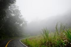 Road through the forest - Road with smog - stock photo
