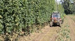 Hop harvest in Mradice Village near Town of Zatec in Czech Republic Stock Footage