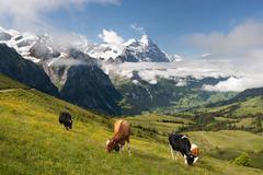 Alps in Switzerland Stock Photos