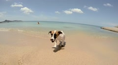 Jack Russel Puppy Dog Shaking Off Water after Swimming in Sea Stock Footage