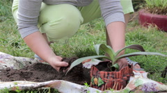 Pot to plant in hands Stock Footage