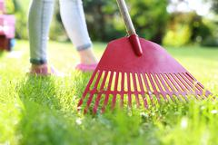 How to cultivate lawn. - stock photo
