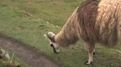 Stock Video Footage of Lima in Cuzco, Peru