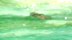Seal - swimming and diving in slow motion Stock Footage