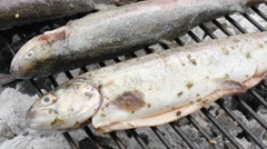 Trout fish on barbecue slow grilling close-up 4K 2160p UltraHD footage - Fres Stock Footage