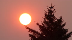 Smoke Filled Sky At Sunset With Tree Stock Footage