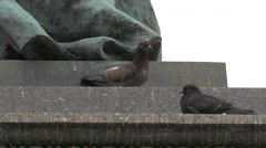 Birds relaxing on Adam Mickiewicz Monument, Krakow Stock Footage