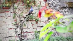 Pigeon Drinking from Water Fountain in Beautiful Garden Stock Footage