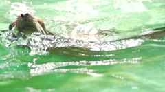 seal - swimming and diving in slow motion - stock footage