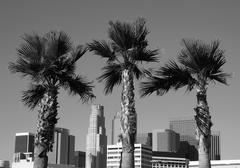 LA Palms Black and White - stock photo