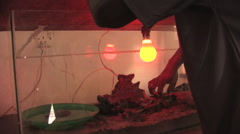 A Snake Under a Heat Lamp Being Picked Up in Kitwe, Zambia Stock Footage