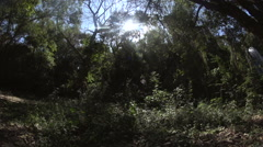 Forest - Under the canopy of trees, the sun shines in the sky Stock Footage