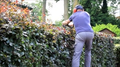hedge cutting with engine hedge trimmer, gardening, cutting beech hedge, audio - stock footage