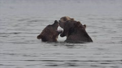 Grizzly Bears fighting Stock Footage