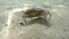 Underwater shot of a cool crab on the sea floor bottom Stock Footage