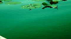 Turquoise Lake, Lotus Leaves With Water Shining In The Sun Stock Footage