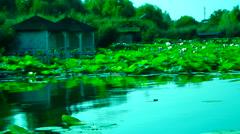 Serene Lacustrine Landscape With Lotus Leaves,Turquoise Lake Stock Footage