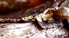 Hesitating snail on a stump with sound. Stock Footage