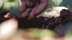 Calloused hands of rural workers planting seeds Stock Footage