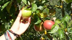 Stock Video Footage of apples in a tree