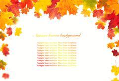 Isolated autumn leaves on white background Stock Photos