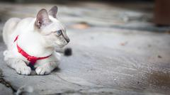 white cat squatting on the floor and look outside - stock photo