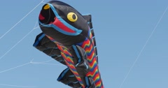 Black Fish Air Swimmer - Kites of All Kinds And Shapes on International Kite Stock Footage