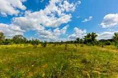nice summer meadow - stock photo