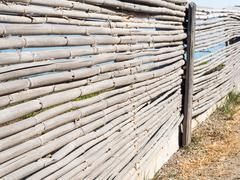 yellow reeds cut - stock photo