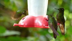 Hummingbirds Feeding Closeup Stock Footage