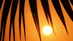 Palm trees at sunset, close-up 5 Stock Footage