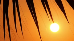Palm trees at sunset, close-up 4 Stock Footage