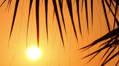 Palm trees at sunset, close-up 2 Stock Footage