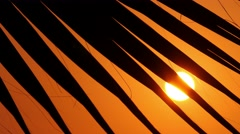 Palm trees at sunset, close-up 1 Stock Footage