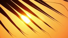 Palm leaves against the sunset 5 Stock Footage