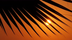 Palm leaves against the sunset 3 Stock Footage