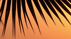 Leaves of palm trees at sunset 4 Stock Footage