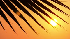 Leaves of palm trees at sunset 2 Stock Footage