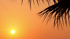 Leaves of palm trees at sunset 1 Stock Footage