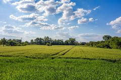 Stock Photo of Meadow and corn field, rural landscape